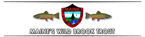 Norhtern Maine Wild Brook Trout